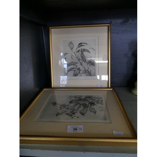 36 - Winifred Austen, Blackcaps with ivy berries and 'Lesser White Throat' etchings, framed and glazed (2...