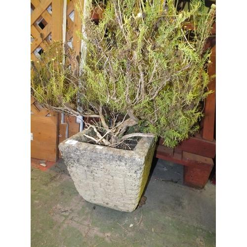 37 - Small stoneware planter approx 1' square...