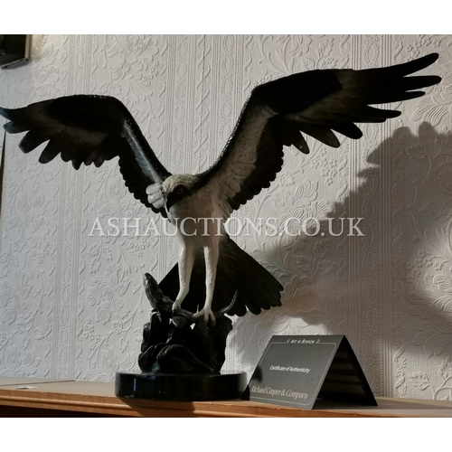 61 - SOLID FOUNDRY BRONZE Huge 67cm x 42cm (Weight 11.7kg) MODEL OF AN OSPREY CATCHING A FISH (Sculpted B...