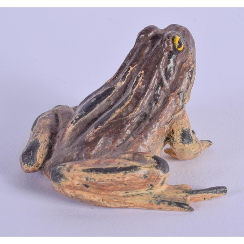 765 - A COLD PAINTED BRONZE FROG. 5 cm x 4 cm....