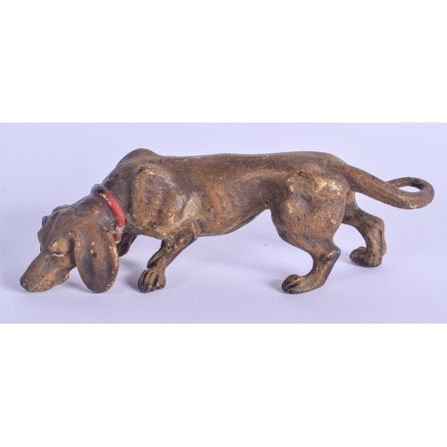 800 - A COLD PAINTED BRONZE DOG. 12 cm x 4 cm....