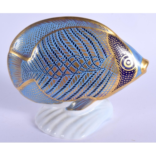 227 - Royal Crown Derby paperweight Chevroned Butterfly Fish. 13.5cm wide....