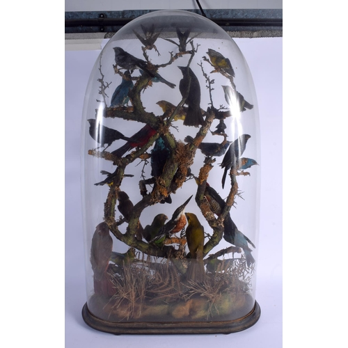 523 - A FINE LARGE VICTORIAN TAXIDERMY STUDY OF EXOTIC BIRDS modelled with various species within a natura...