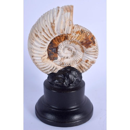 546 - A FOSSIL AMMONITE ON STAND. 17 cm x 7 cm....