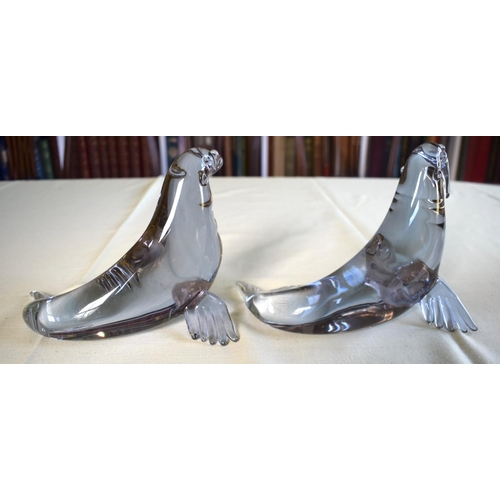 27 - A PAIR OF ITALIAN MURANO GLASS WALRUS modelled with heads raised. 16 cm  x 14 cm.