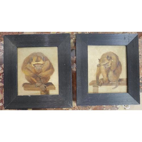 23 - Early 20th century school, Two studies of Monkeys, oil on panel, in ebonised frames, 14 x 12cm...