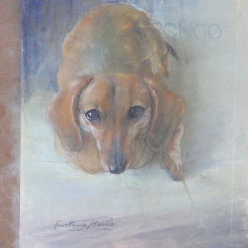 87 - Constance Haile (20th century British), 'Pongo', pastel, signed to lower left, 45 x 37cm...