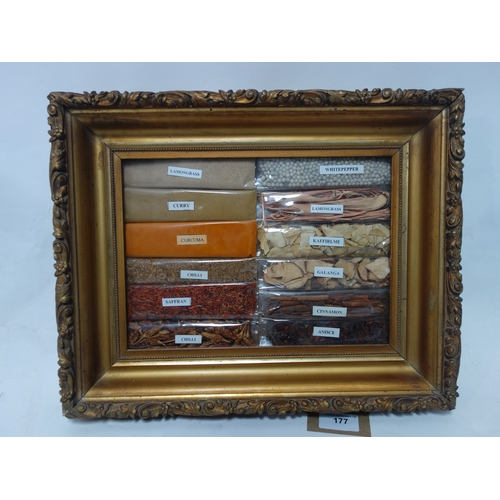 177 - Specimen spices in a 19th century gilt frame. H.31 W.38cm...