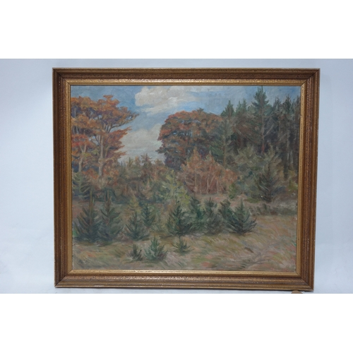 374 - Tony Muller (1873-1965), Woodland landscape, oil on canvas, signed lower left, 53 x 66cm...