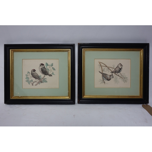 153 - Early 20th century school, two coloured etchings of birds, signed in pencil to lower margins, framed...