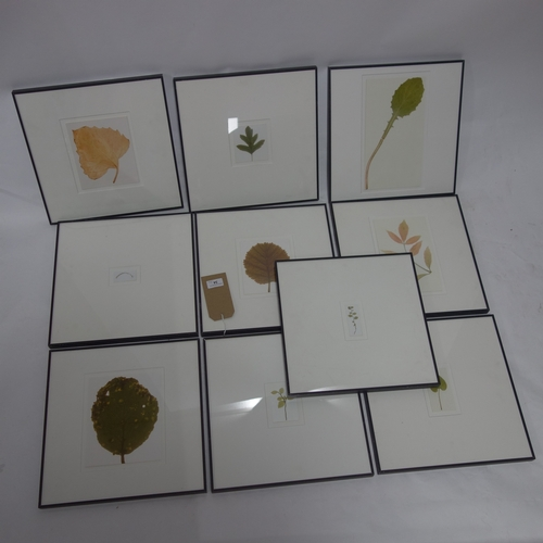 34 - Garry Fabian Miller, ten framed photos of leaves, 14 x 12cm...