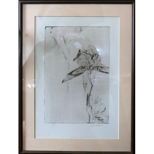 65 - A limited edition drypoint etching of flowers, signed and dated 1983 in pencil to lower margin, numb...