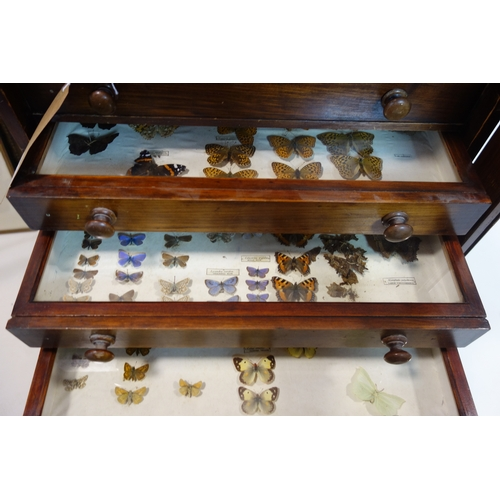 415 - A Victorian mahogany specimen chest of 12 drawers, containing butterfly, moth, bees and wasp specime...