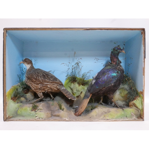 135 - A taxidermy study of two birds in display case, H.60 W.92 D.26cm...