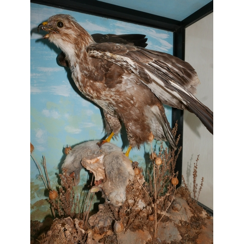 139 - A taxidermy study of a hawk catching a rabbit set in display case, H.74 W.70 D.43cm...