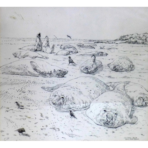 183 - John Philip Busby, R.S.W, R.S.A (1928-2015), pencil drawing of sea lions on a beach, 53 x 55cm...