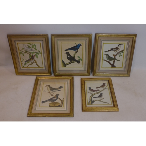 27 - A set of five early 19th century French hand-coloured prints of birds, to include Blackbirds, Ortola...