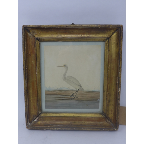 14 - A 19th century watercolour of a bird by a pond, in giltwood and gesso frame, 19 x 16cm, with label f...