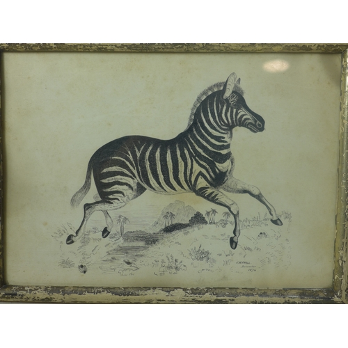 23 - J. W. Ryall (19th century British school), A Zebra with mountain to background, pen and ink, signed ...