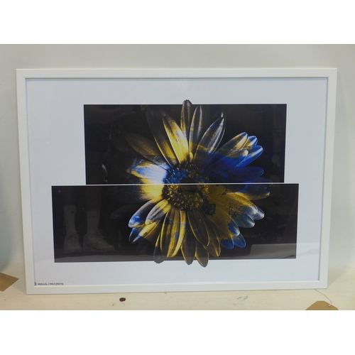 258 - A diptych photographic print of a flower, from Studio Bezalel, in white frame, 49 x 69cm...