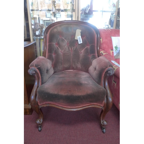 555 - A Victorian mahogany spoon back armchair, with button back velour upholstery, raised on cabriole leg...