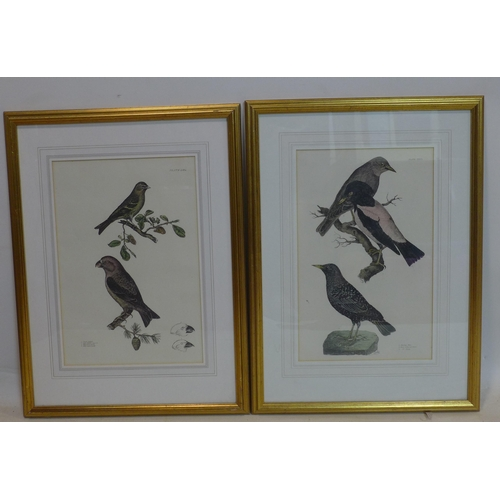 535 - John Prideaux Selby (1788-1867), a set of 6 late 19th century illustrations of British Ornithology, ...