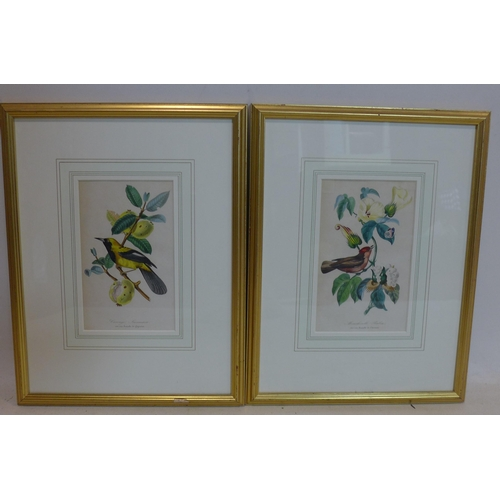 540 - Two pair of flora and fauna prints in gilt frames...