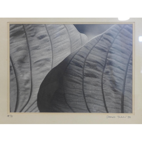 161 - Darius Tuiali, a photographic print of closeup view of leaves, signed and dated '99 to lower margin,...