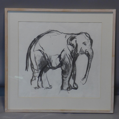 568 - Vanessa Pomeroy, charcoal study of an elephant, unsigned, framed and glazed, 53 x 58cm...