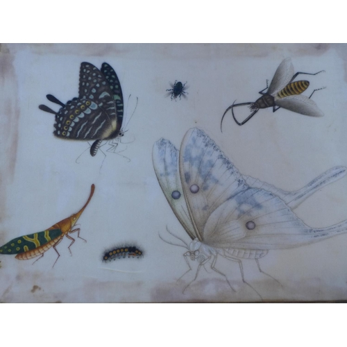 535 - Set of Six Chinese Paintings of Butterflies and Insects, pith paper pasted on silk cloth and paper b...
