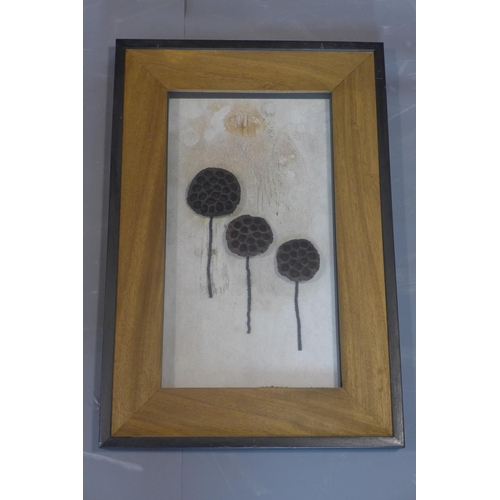 240 - A set of 6 framed plant specimens, to include sea beans, coco twigs, cassia bark and other, each sta...