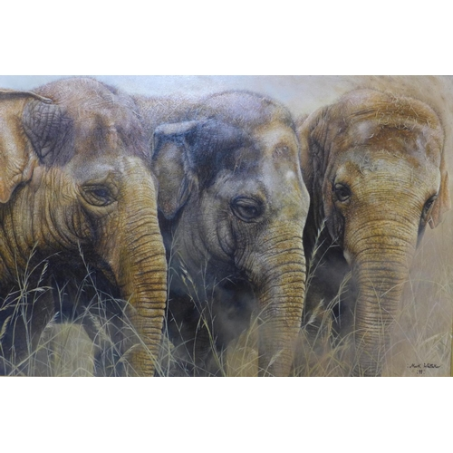 296 - Mark Whittaker (British, b.1964), 'The Young Ones, Three Elephants', acrylic on board, signed and da...
