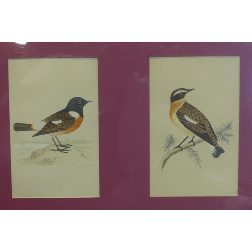 88 - Four hand coloured etchings of beautiful birds from 'A history of British birds' by Rev. O.M. Morris...