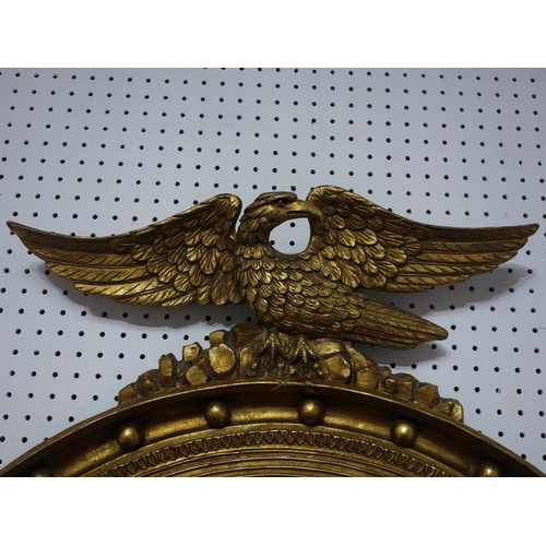 585 - A large Regency design carved gilt circular mirror, with winged eagle surmount, having circular beve...