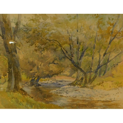 353 - Two framed and glazed watercolours, woodland streams. H.42 W.52cm...