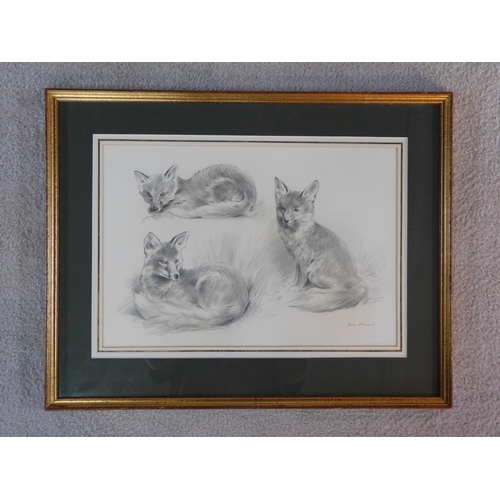290 - A framed and glazed pencil drawing, various fox studies, by John Edwards (British, born in 1940). 47...
