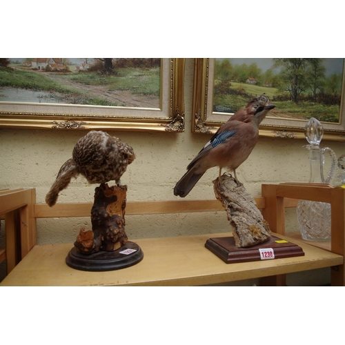 1230 - <strong>Taxidermy: </strong>a jay....