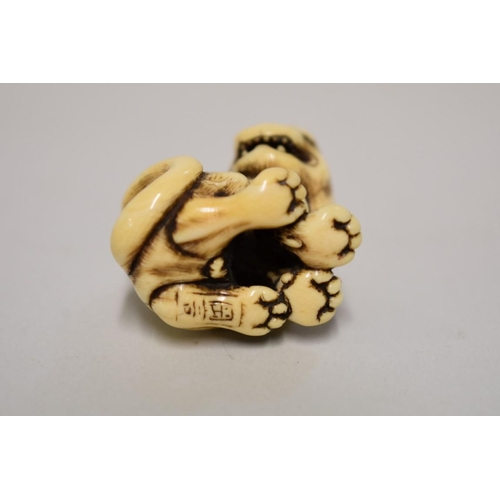 559 - <strong>A good Japanese carved ivory netsuke of a tiger or monkey,</strong> <em>Kyoto School, probab...