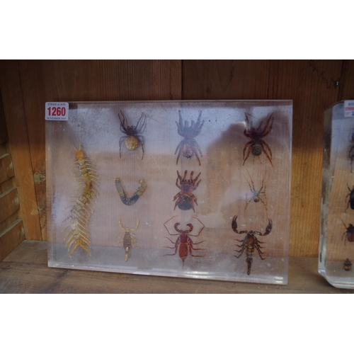 1260 - <strong>Two acrylic displays of beetles, spiders and related,</strong> each approx 21 x 29.5cm....