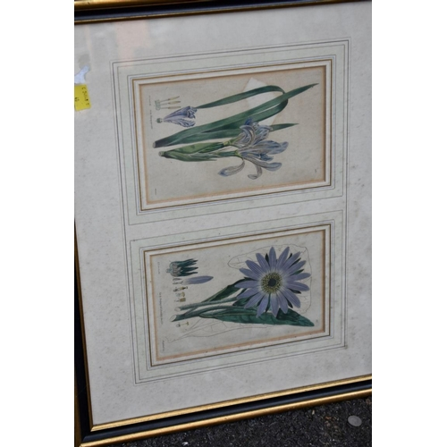1020 - Seventeen various botanical prints.<strong>This lot can only be collected on Saturday 5th Sept...