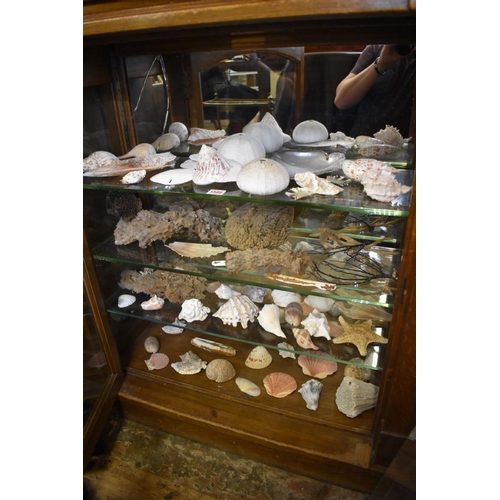 1586 - <strong>A large collection of seashells and similar.</strong>(4 shelves)...