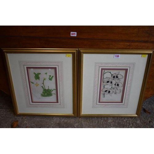 1105 - Two botanical prints.<br /><strong>This lot can only be collected on Saturday 10th October (10-2pm)<...