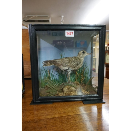 1427 - <strong>Taxidermy: </strong>aSandpiper, in a glazed case, 29 x 28.5cm....