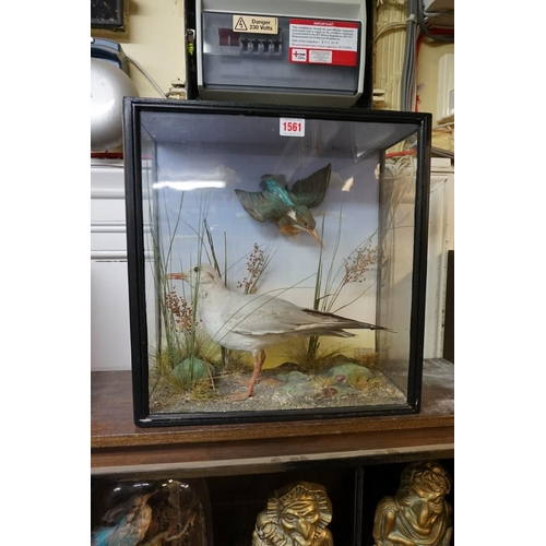 1561 - <strong>Taxidermy:</strong>a Gull and a Kingfisher, in a glazed case, labelled 'G White, Naturalist...