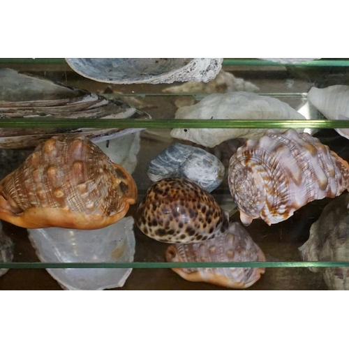 1658 - <strong>Natural History:</strong>a quantity of seashells, to include: abalone. (four shelves)...