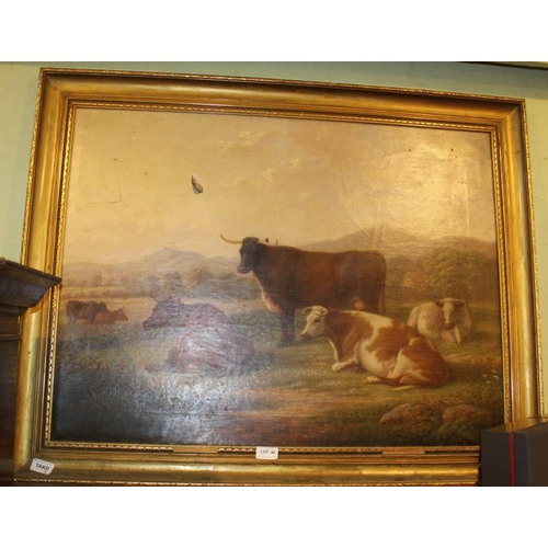 48 - EDWIN BROWN OF COVENTRY <br>A late 19th century oil on canvas portrait study of livestock cattle, si...