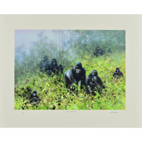 37 - DAVID SHEPHERD (1931-2017) 'IN THE MISTS OF RWANDA', a limited edition print 7/250 of a troop of gor...