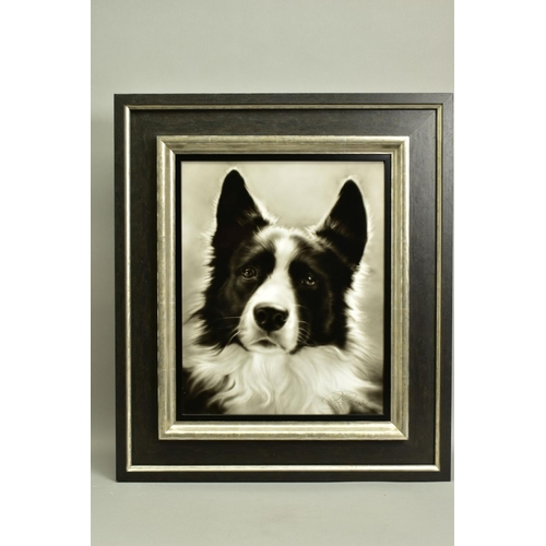 32 - STEVEN SMITH (BRITISH 1974), 'Collie', a portrait of a Collie Dog, signed bottom right, air brush on...