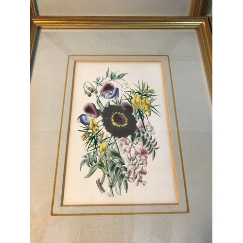 15B - A set of 4 printed and coloured flower prints, by James Andrew dated 1847. Frame measures 27x21cm...