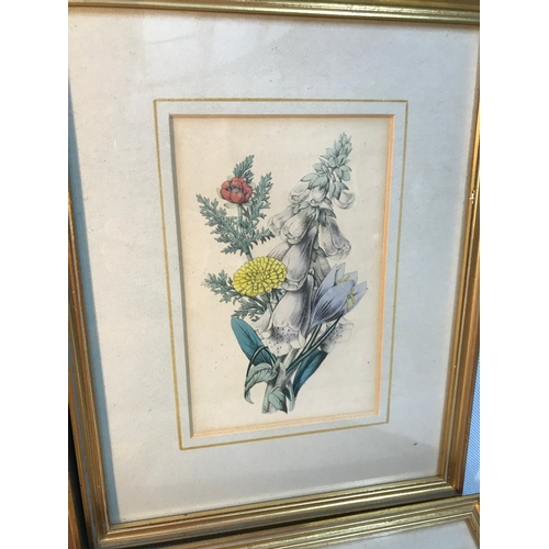 5B - A set of 4 printed and coloured flower prints, by James Andrew dated 1847. Frame measures 27x21cm...